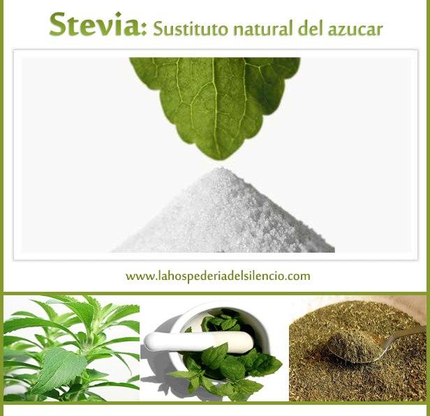 Stevia para diabéticos - Centro de retiros espirituales