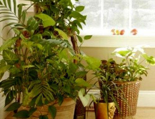 Las plantas más útiles para purificar el aire