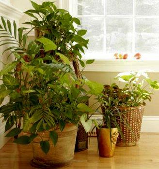 Las plantas m s tiles para purificar el aire centro de for Plantas de interior limpian aire