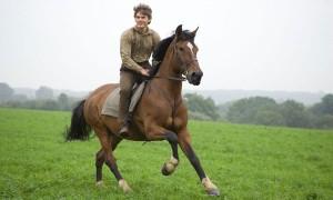 caballo ejercito
