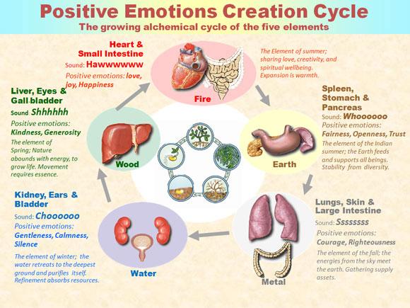 ciclo emociones