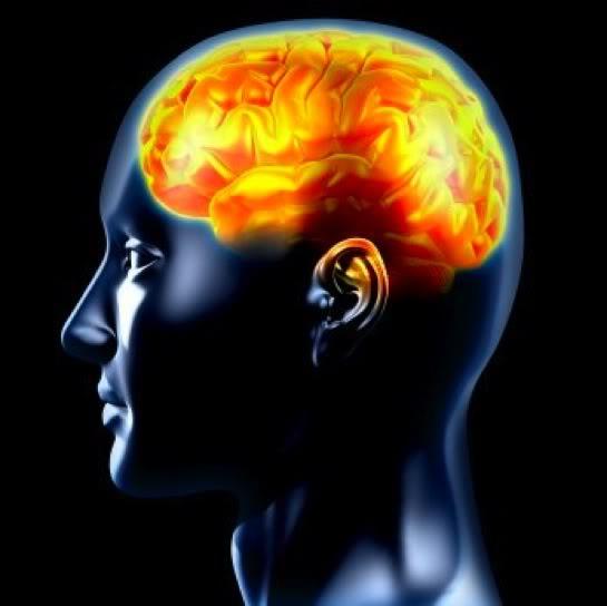 Meditación y cerebro