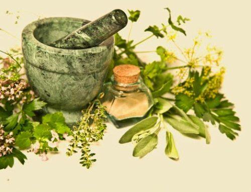 8 plantas medicinales para gripes y resfriados
