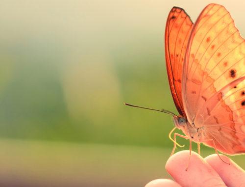 El cuento de la mariposa