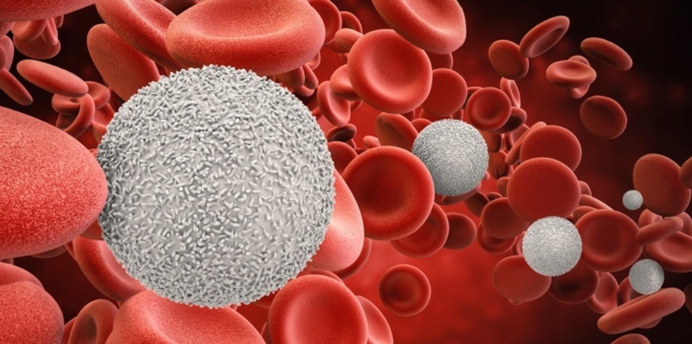 Glóbulos blancos encargados de hacer funcionar el sistema inmune.